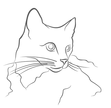 thoroughbred: Portrait of a thoroughbred domestic cat. Illustration