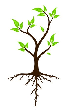 agronomics: Green tree with roots.