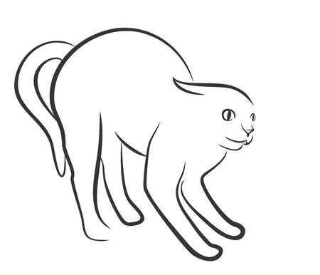 domestic cat: Drawing of domestic cat.