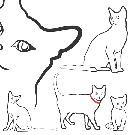 thoroughbred: Sketch of domestic cats.