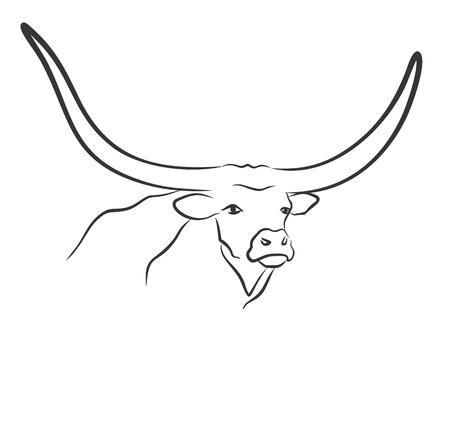 hoofed mammal: head of bull.