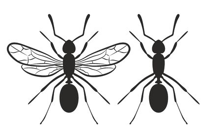termite: Silhouettes of ants. Illustration