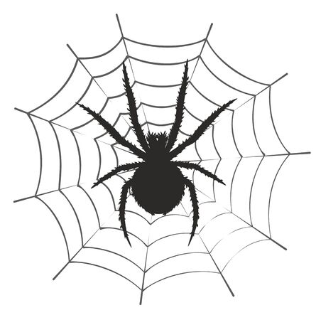 arachnoid: Silhouette of black spider. Illustration