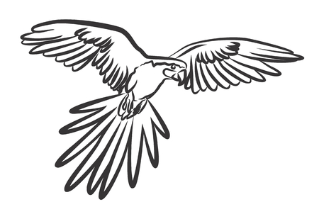 wingspan: a sketch of the flying parrot. Illustration