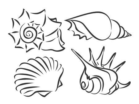 Sketches of sea cockleshells.