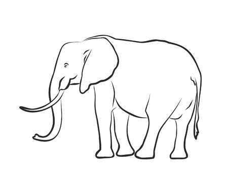sketch: Sketch of elephant. Illustration