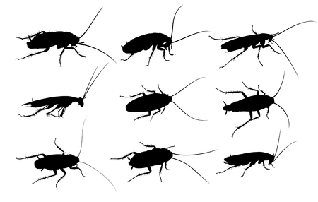 arthropod: Silhouettes of cockroaches.