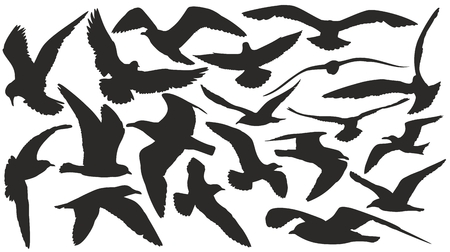 wingspan: Silhouettes of seagulls.
