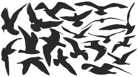 Siluetas de las gaviotas. Ilustración de vector
