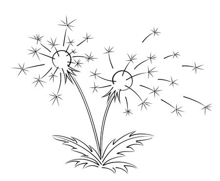 sketch: Sketch of field dandelion.