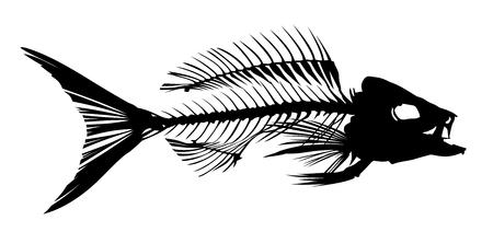 fishery: Skeleton of fish.