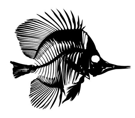 skeleton fish: Skeleton of fish.