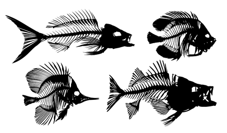 Skeletons of fishes.
