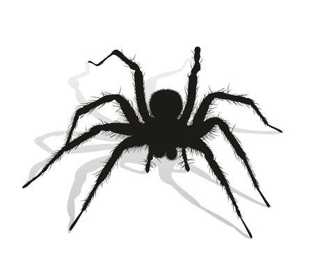 Black spider silhouette. Illustration