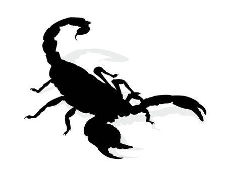 Silhouette of scorpion.