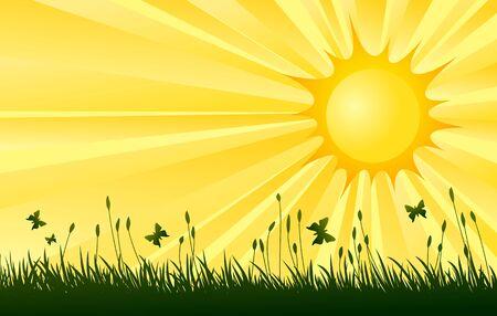 Meadow with sun.