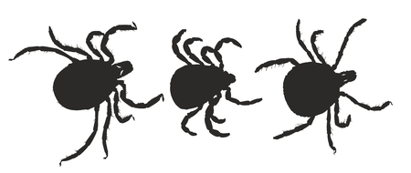 Silhouettes of ticks.