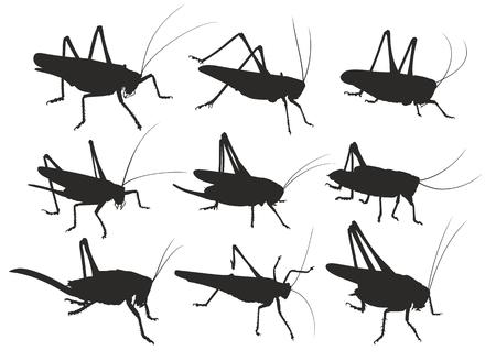 Silhouettes of locust.