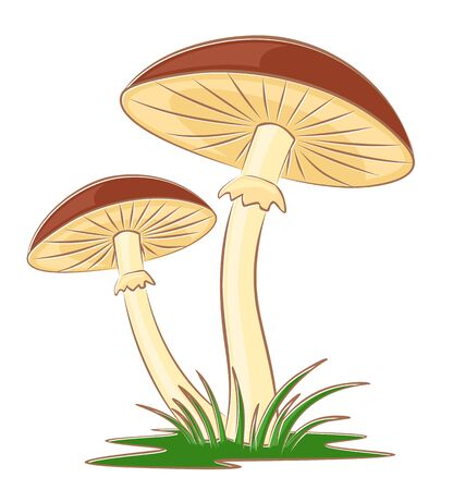 Sketch of forest mushrooms with a grass