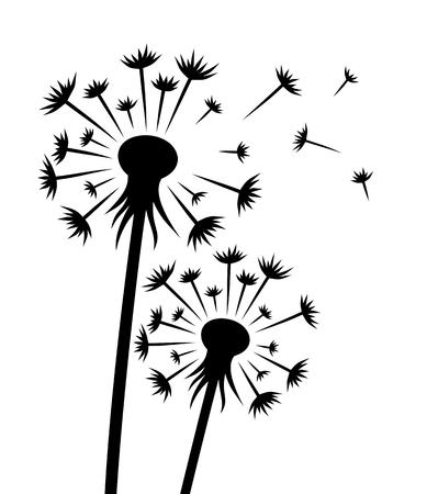Une fleur d'un pissenlit de champ avec des graines.