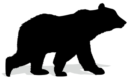 Silhouette of a wild forest bear.