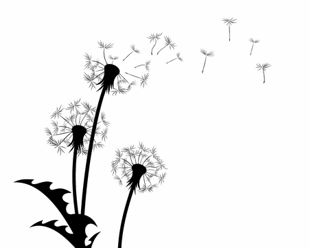 A flower of a field dandelion with flying seeds.  イラスト・ベクター素材