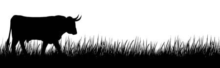 A silhouette of a big cow on a meadow.