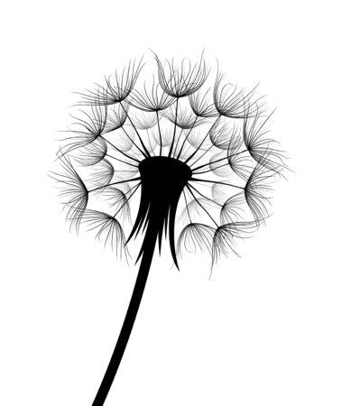 Le croquis de fleur de pissenlit des champs.