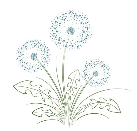 A flower of a field dandelion with seeds.