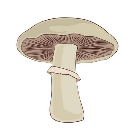 The Symbol of white forest champignon. Illustration