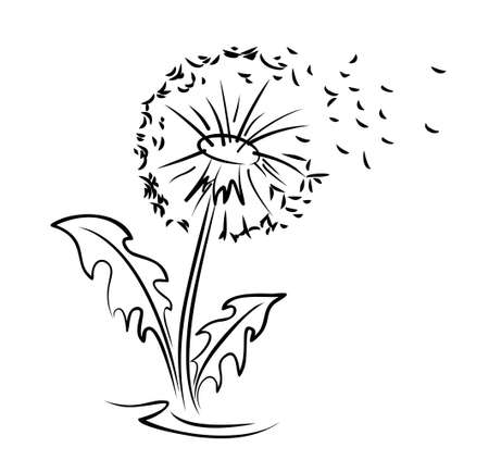 A flower of a field dandelion with flying seeds. Illustration