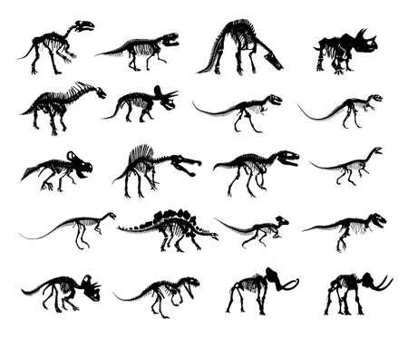 The big set of Skeleton ancient dinosaur.