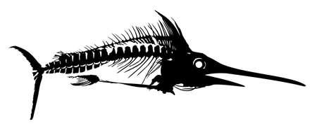 A Skeleton of big predatory sea fish.