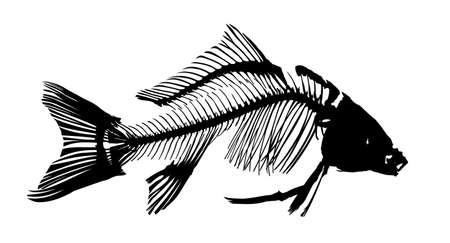 The Silhouette of river carp skeleton.