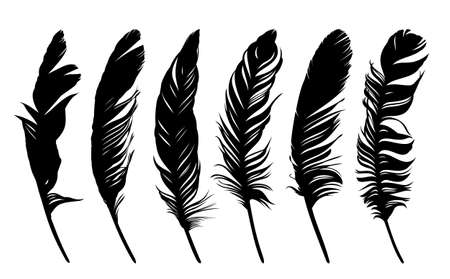 Set feathers of various birds. Vectores