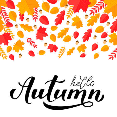 Hello Autumn calligraphy hand lettering with fall leaves and acorns. Seasonal inspirational quote typography poster. Easy to edit vector template for banner, flyer, sticker, postcard, mug, etc.