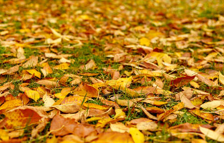 Fallen leaves covered the ground in autumnal forest. Indian summer or Autumn mood scene. Tilt-shift effect. Selective focus photography. Blurred nature background.