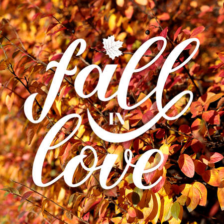 Fall in Love calligraphy hand lettering on blurred picture with colorful leaves. Cozy autumn mood concept. Autumnal garden on a sunny day. Bright fall background.