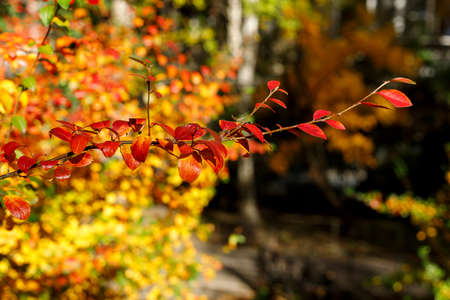 autumn, autumnal, background, red, Branch, beautiful, blur, blurred, bright, brown, closeup, color, colorful, green, bush, day, bokeh, fall, focus, foliage, gold, golden, grass, vibes, ground, leaf, leaves, macro, maple, natural, nature, november, october, orange, outdoor, park, photography, season, seasonal, september, soft, sun, sunny, tree, yellow, deciduous, turf, yard, selective, city Imagens