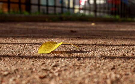 A fallen yellow leaf lies alone on the path. Soft focus photography. Tilt-shift effect. Autumn melancholic mood. Imagens