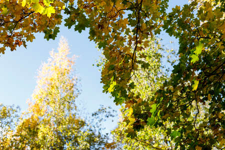 Crowns of autumn trees with colorful leaves against blue sky. or Autumn vibes scene. Indian summer soft focus photography. Blurred seasonal nature background.