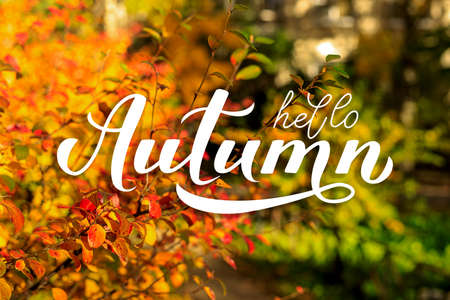 Hello Autumn calligraphy hand lettering on blurred picture with colorful leaves. Autumnal garden on a sunny day. Bright fall background.
