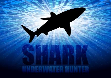 diving: Vector illustrated shark Illustration