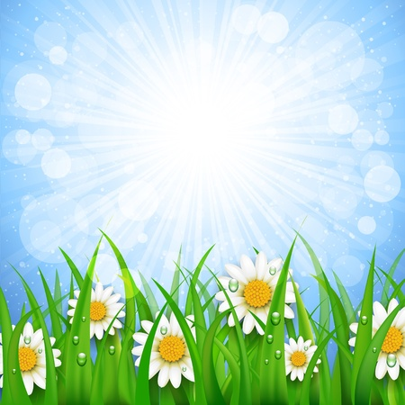 background with daisies and sun Vector