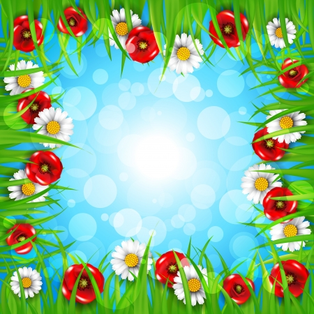 margerite: Spring background with daisies and poppies Illustration