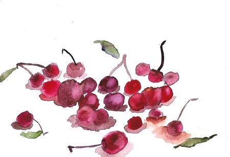 watercolor illustration sketch of cherry. fresh berries