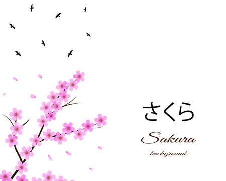 Sakura design with floral cherry tree branch and birds. White isolated background. Vector eps 10.