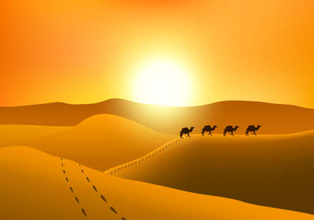 Marcher camels silhouette in the desert at sunset. 矢量图像
