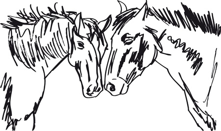 Stallion Sketch. illustration Vector