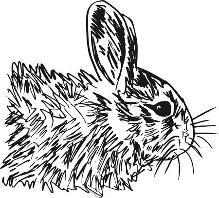 wild rabbit: sketch of little hare. illustration Illustration